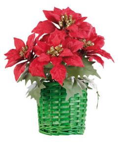 Composition florale de Noël avec poinsettias et panier tissé
