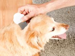 peigne à pattes fines pour puces poils chien poux lentes enfants