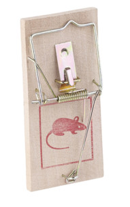 pack de 10 tapettes à souris en bois piege letal souris rongeur rat mulot nuisible