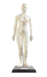 Modèle d'acupuncture 45 cm - Femme